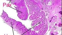 Що показує онкомаркер реа і яка його норма у жінок: пояснення лікаря