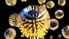 Особливості розвитку ротавірусної інфекції у дітей та дорослих